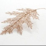 A little weird but very cool leaves made out of human hair