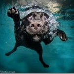 Interesting photos of underwater dogs