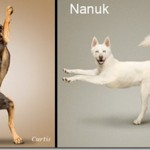 Cute yoga dogs