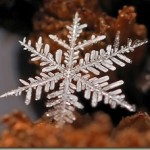 Beautiful closeup photos of snowflakes taken by macro lens