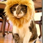 Funny pet costume – Self-confident as a lion