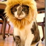 Funny pet costume – Self-confident as a lion