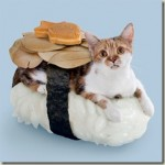 Make cat into sushi – Sushi Cats