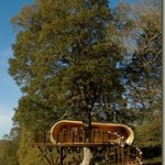 Comfortable tree house in your backyard