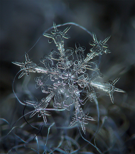 amazing-photography-beautiful-snowflake-pictures-macro-photographs (11)