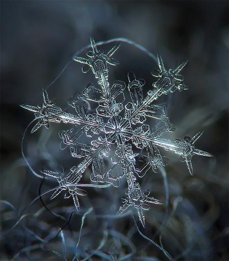 Stunning Snowflakes Photographs