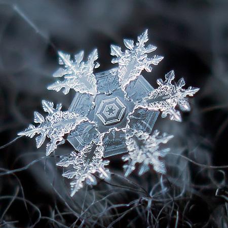 amazing-photography-beautiful-snowflake-pictures-macro-photographs (9)