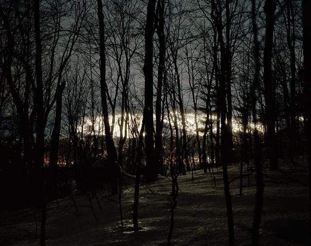 saveur_trees 001