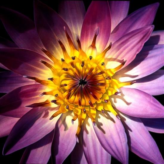 beautiful-wonderful-ultra-realistic-photo-like-flowers-and-fruits-oil-paintings (3)