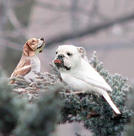 funny-ps-pictures-manipulation-cute-dog-bird-images (2)