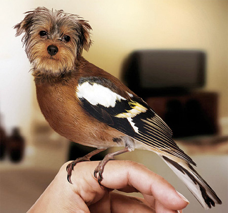 funny-ps-pictures-manipulation-cute-dog-bird-images (3)