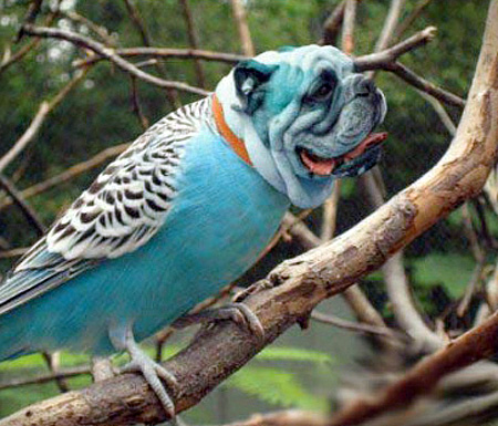 funny-ps-pictures-manipulation-cute-dog-bird-images (4)