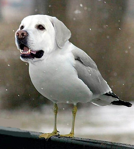 funny-ps-pictures-manipulation-cute-dog-bird-images (5)