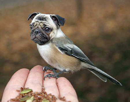 funny-ps-pictures-manipulation-cute-dog-bird-images (6)