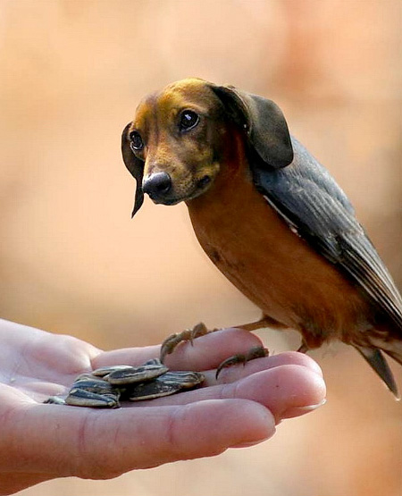 funny-ps-pictures-manipulation-cute-dog-bird-images (7)