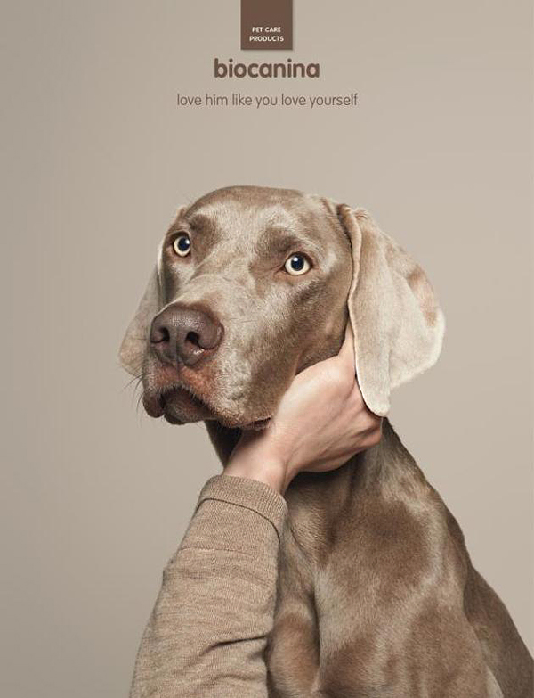 interesting-humorous-creative-funny-advertising-campaign-pet (1)