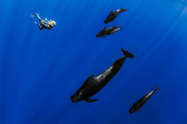 wonderful-beautiful-underwater-photography-Pacific-Ocean-whales (1)