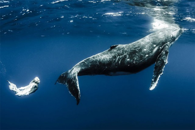 wonderful-beautiful-underwater-photography-Pacific-Ocean-whales (3)