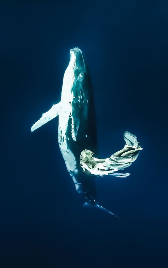 wonderful-beautiful-underwater-photography-Pacific-Ocean-whales (5)