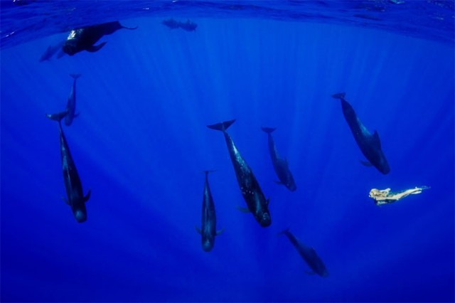 wonderful-beautiful-underwater-photography-Pacific-Ocean-whales (7)