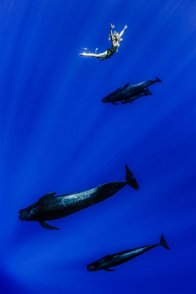 Aesthetic Underwater Photography Vuing Com