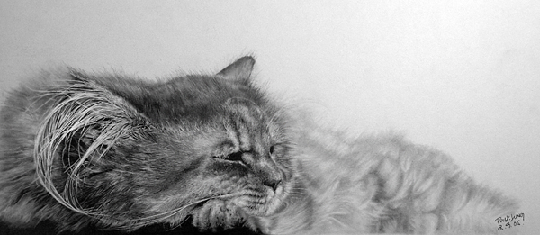 wonderful-incredible-cool-amazing-pencil-drawings-cat-images (1)