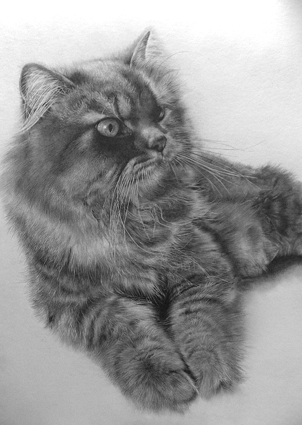 wonderful-incredible-cool-amazing-pencil-drawings-cat-images (10)