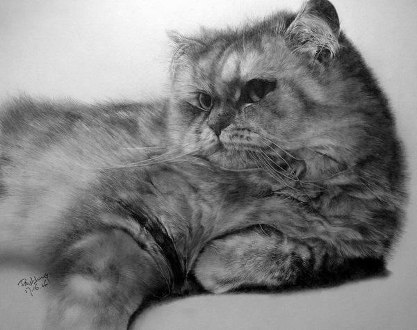 wonderful-incredible-cool-amazing-pencil-drawings-cat-images (12)