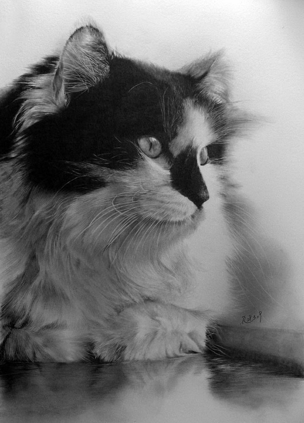 wonderful-incredible-cool-amazing-pencil-drawings-cat-images (13)