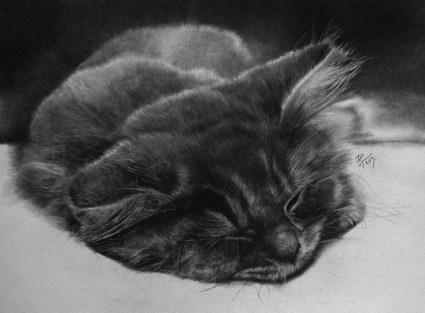 wonderful-incredible-cool-amazing-pencil-drawings-cat-images (15)