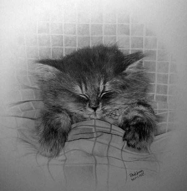 wonderful-incredible-cool-amazing-pencil-drawings-cat-images (3)
