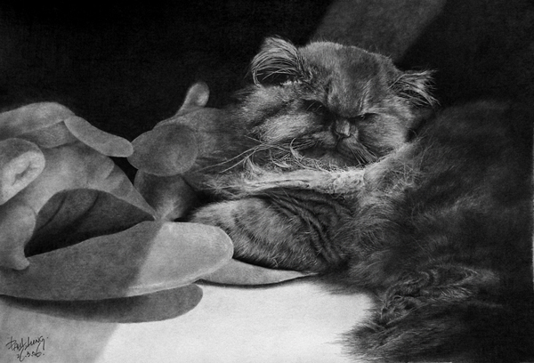 wonderful-incredible-cool-amazing-pencil-drawings-cat-images (4)