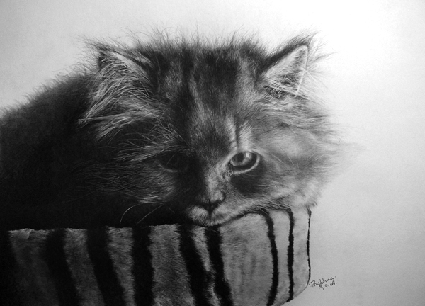 wonderful-incredible-cool-amazing-pencil-drawings-cat-images (5)