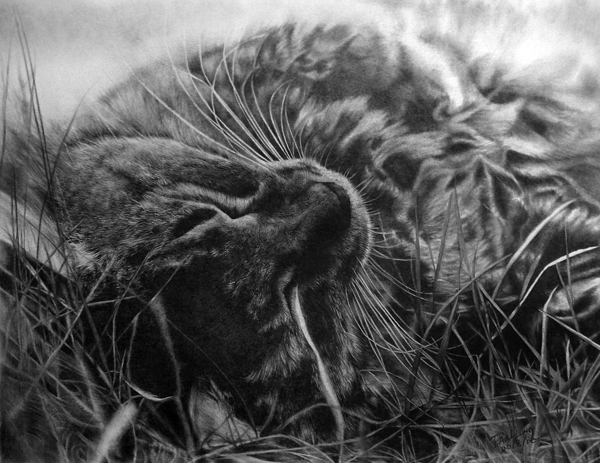 wonderful-incredible-cool-amazing-pencil-drawings-cat-images (6)