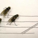 Humorous and creative flies art