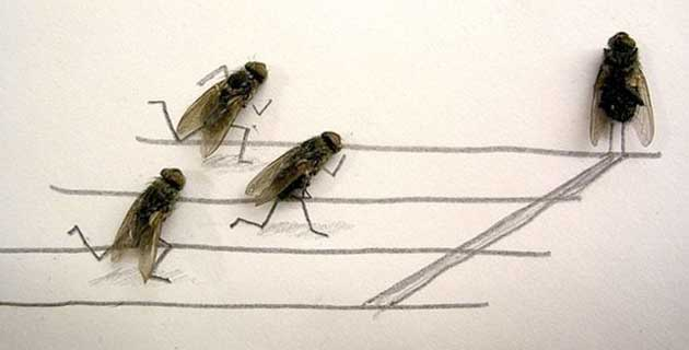 funny-creative-interesting-humorous-flies-art-pictures (1)