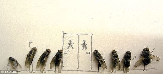 funny-creative-interesting-humorous-flies-art-pictures (2)