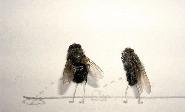 funny-creative-interesting-humorous-flies-art-pictures (3)