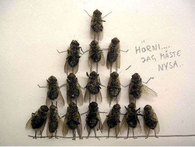 funny-creative-interesting-humorous-flies-art-pictures (5)