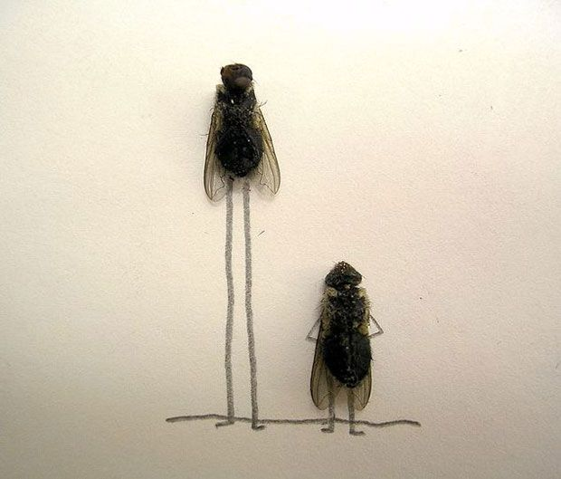 funny-creative-interesting-humorous-flies-art-pictures (6)