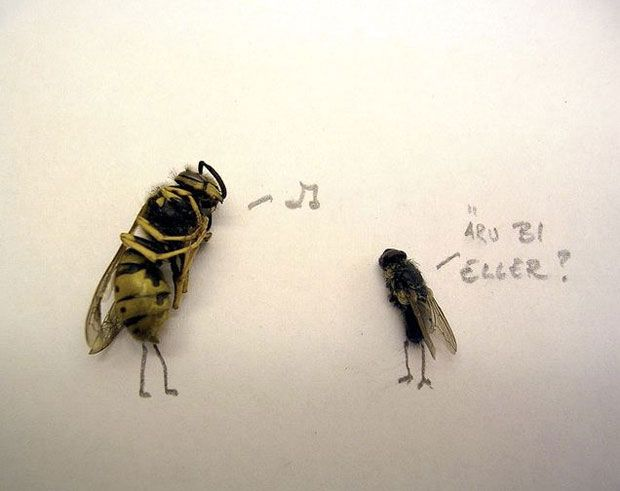 funny-creative-interesting-humorous-flies-art-pictures (7)
