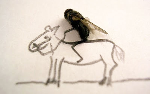 funny-creative-interesting-humorous-flies-art-pictures (8)