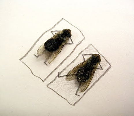 funny-creative-interesting-humorous-flies-art-pictures