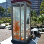 gold-Fish-Tank-aquarium-Phone-booth (1)