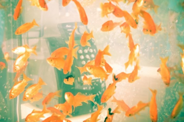 gold-Fish-Tank-aquarium-Phone-booth