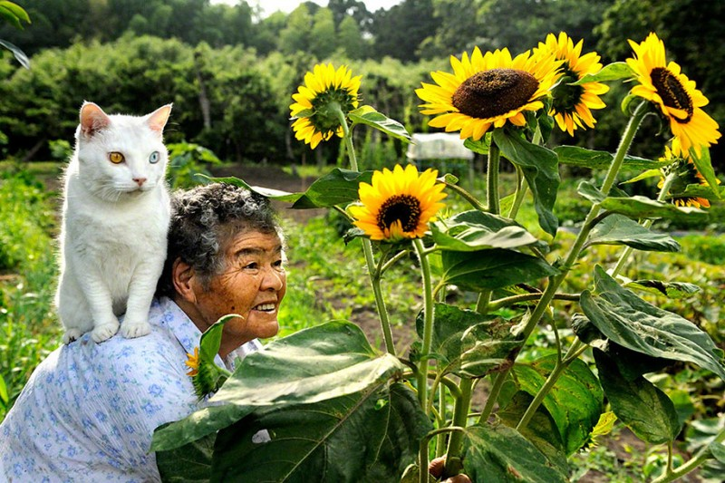 affecting-heart-warming-grandmother-and-odd-eyed-cat-photos (11)