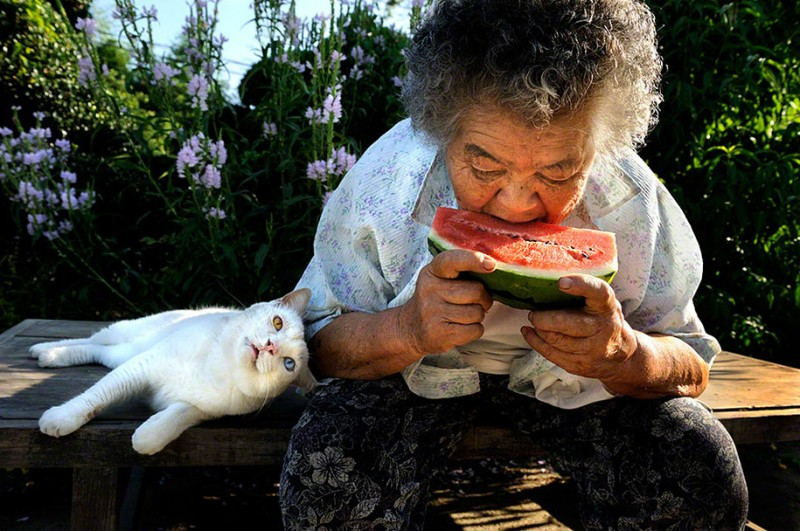 affecting-heart-warming-grandmother-and-odd-eyed-cat-photos (12)
