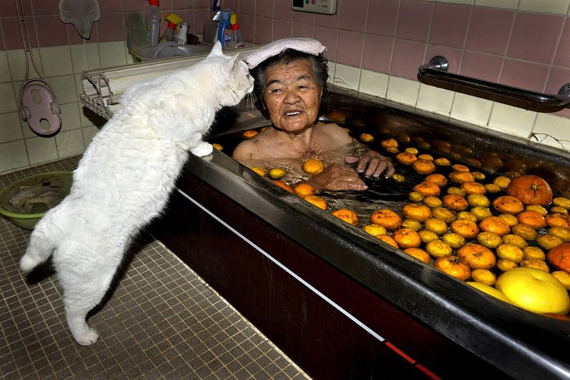 affecting-heart-warming-grandmother-and-odd-eyed-cat-photos (13)