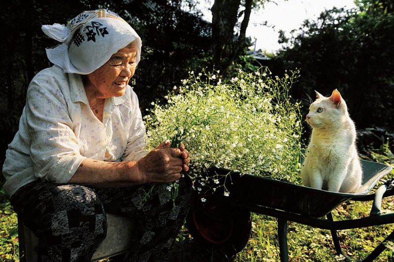 affecting-heart-warming-grandmother-and-odd-eyed-cat-photos (2)
