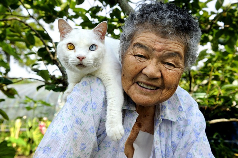 affecting-heart-warming-grandmother-and-odd-eyed-cat-photos (8)